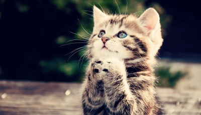 praying-kitty.jpg
