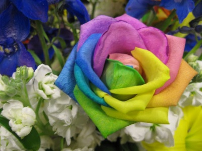 rainbow+rose+happy+roses.jpg